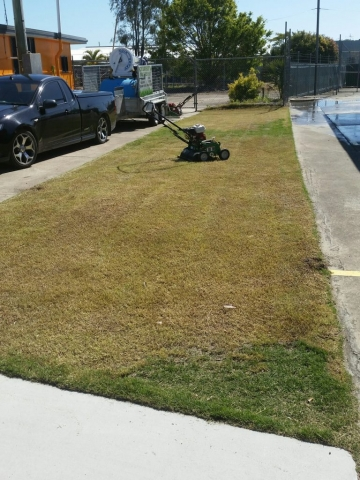 Scarifying lawn in Hervey Bay